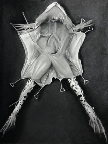 Princesse, 2019 Dessin à la pierre noire sur papier 37,5 x 45,5 cm, RT946 ©Raphaël Tachdjian