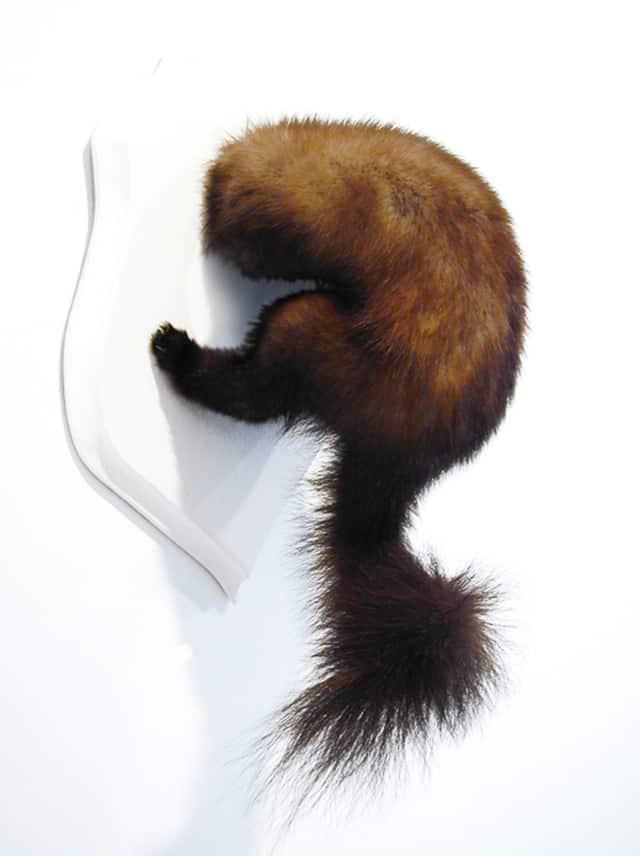 Fouine, 2007 Troché de face, Poézies animales Taxidermie sur blason de bois ©Ghyslain Bertholon