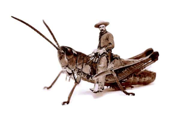 Grasshopper Boy I, 2014 Impression Ink-Jet sur papier à dessin  40 x 60 cm ©Ghyslain Bertholon