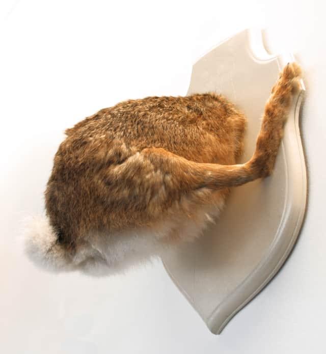Lièvre, 2006 Troché de face, Poézies animales Lièvre naturalisé sur bois laqué 50 x 30 x 25 cm ©Ghyslain Bertholon