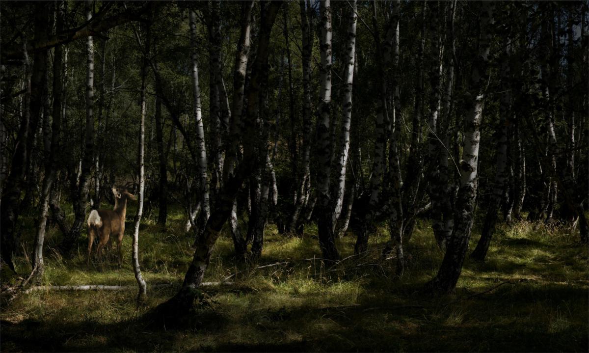 Hommage à Courbet, 2013 série Hommage ©Nicolas Dhervillers