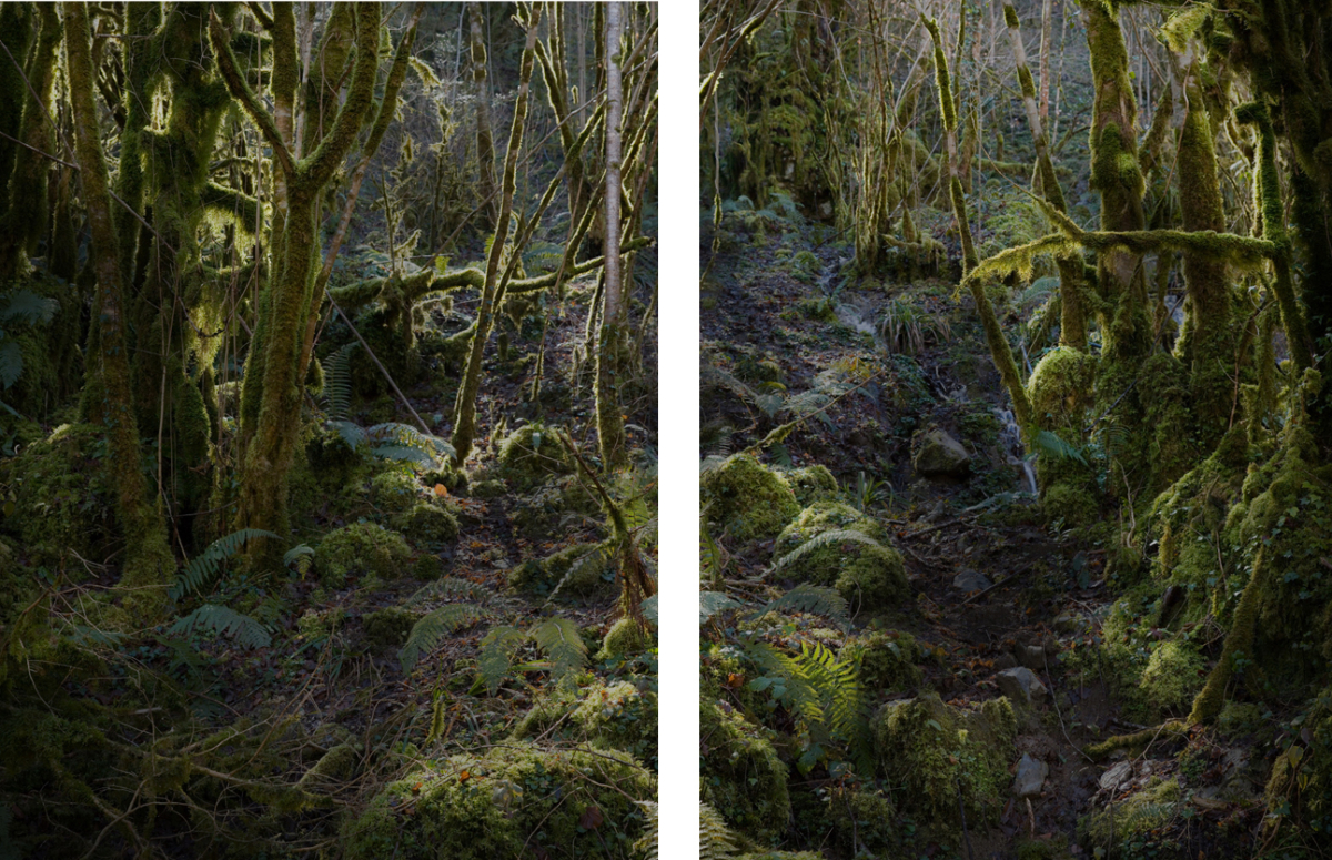 River 1 - Diptyque 110 x 150 cm ©Nicolas Dhervillers