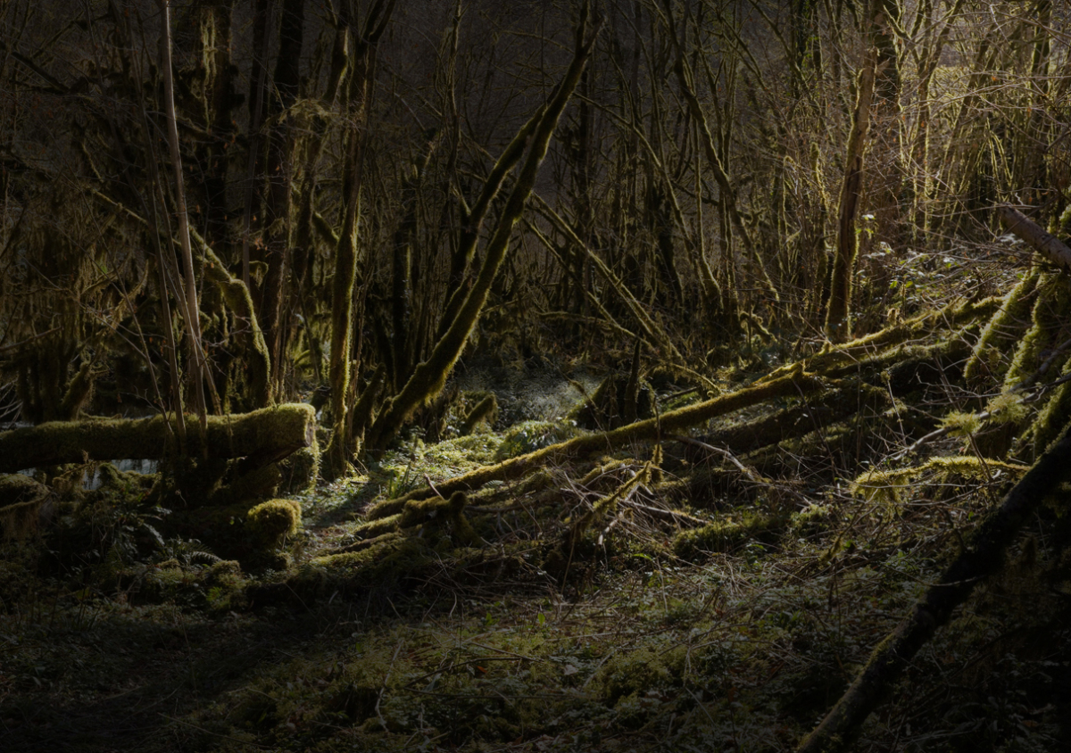 River 7 100 x 140 cm ©Nicolas Dhervillers