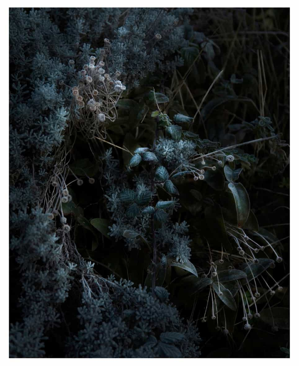 Untitled #1, Still Life, 2015 Photographie ©Nicolas Dhervillers
