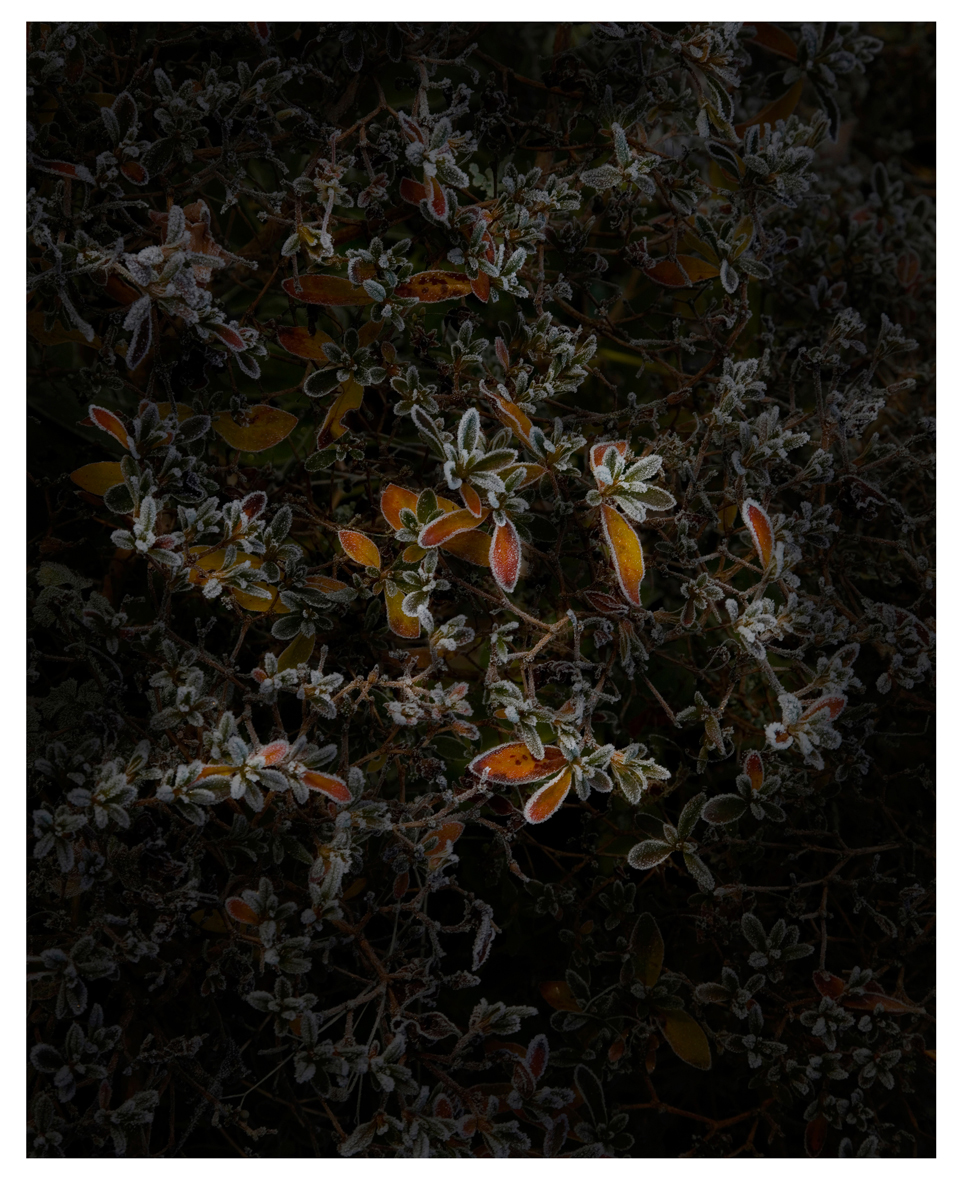 Untitled #2, Still Life, 2015 Photographie ©Nicolas Dhervillers