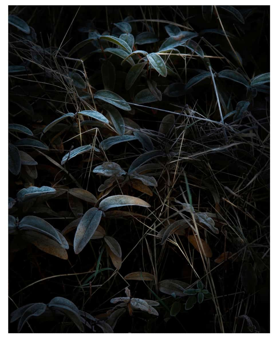 Untitled #7, Still Life, 2015 Photographie ©Nicolas Dhervillers